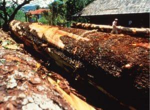 batismo de canoa havaiana